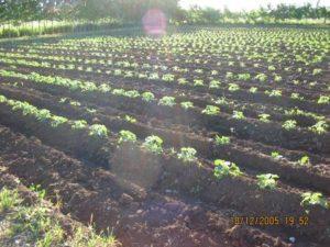 Melones al 26-12-05 060 (26)
