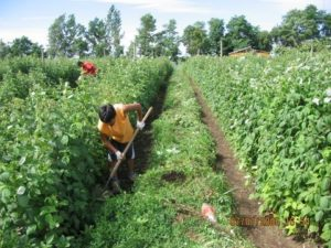 Melones al Fotos al 7 -01-06 (4)